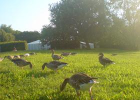 Lab-Festival: Noch belagern Enten die Wiese um das Zelt